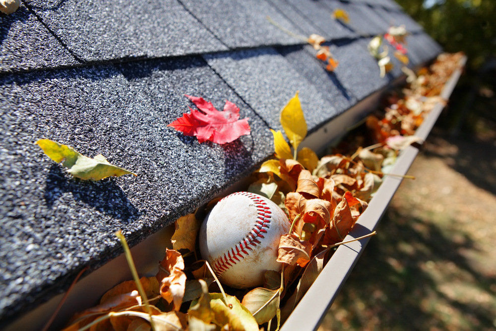 Baseball in leaf-filled gutter