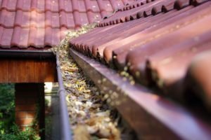 Fall Leaves In Gutter System