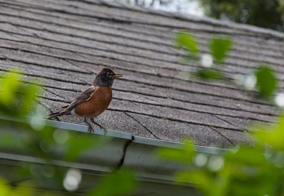 Spring Roof Maintenance